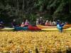 Entenrennen-2012-0121