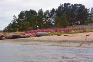 Finnische Schären (3)